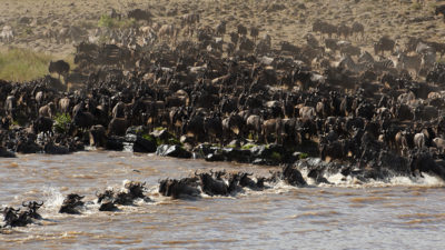 See the Great Migration